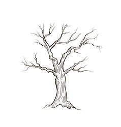 Tree without leaves nature sign floral winter vector