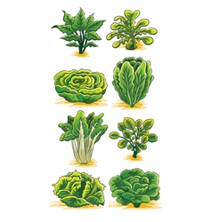 Green Vegetables Collection vector image vector image
