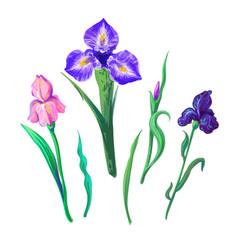 ornate flowers for spring or summer design vector image vector image