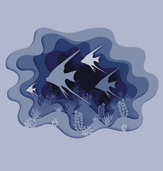 a cant beautiful fish vector image