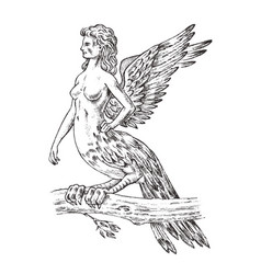 antique harpy woman bird eagle mythical greek vector image