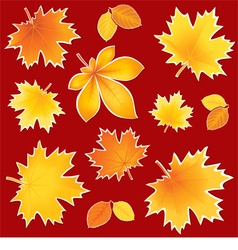Collection autumn leaves vector image