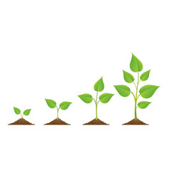 Plants growing icons isolated on white vector