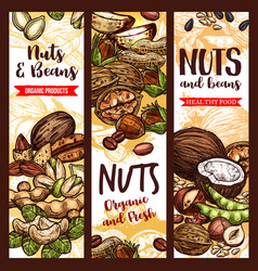 Sketch banner of nuts and fruit beans seeds vector