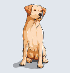 Cute beige labrador retriever dog sitting vector