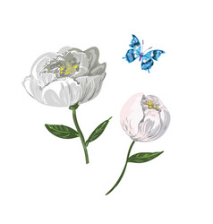 floral elements of white peony with butterfly vector image