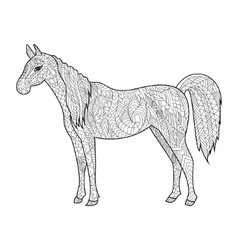 Horse coloring book for adults vector
