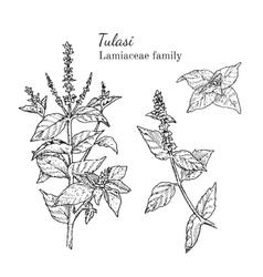 Ink tulasi hand drawn sketch vector
