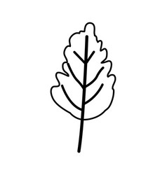 sketch contour of wavy leaf plant vector image