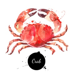 Watercolor hand drawn crab isolated fresh seafood vector