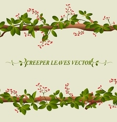 Border of creeper flower vector image