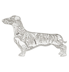 dachshund coloring book for adults vector image