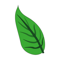 Color image green leaf with ramifications vector