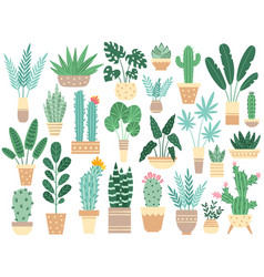 home plants in pots nature houseplants vector image