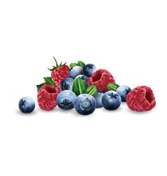 Raspberries blueberries and strawberries vector