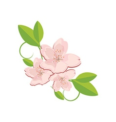 Sakura flower with leaves vector image