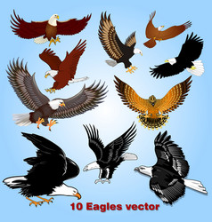 set eagles in flight in sky vector image