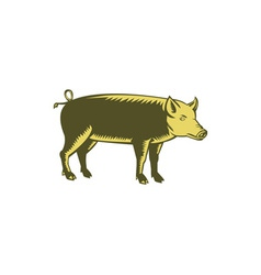 Tamworth Pig Side Woodcut vector