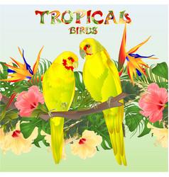 Tropical seamless border birds parots vector