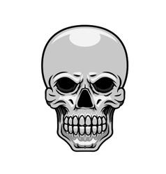 Danger human or monster skull vector image vector image