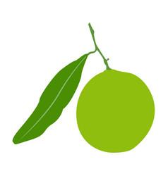 isolated lemon fruit vector image