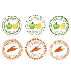 Logo squash and carrots design element package vector image