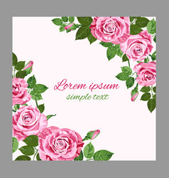 bright pink roses greeting card vector image