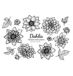 Collection set of dahlia flower and leaves vector