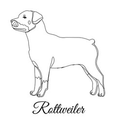 rottweiler dog outline vector image