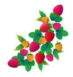 strawberry raspberries fruit on white background vector image