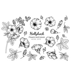 collection set of hollyhock flower and leaves vector image