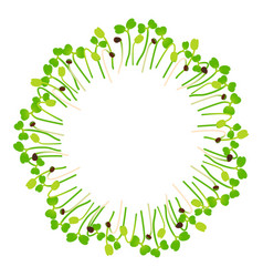 Microgreens arugula arranged in a circle white vector