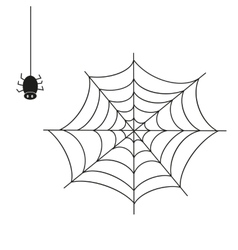 Spider on white background vector