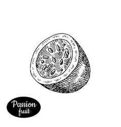 hand drawn sketch style fresh passionfruit vector image