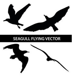 set of silhouette seagull flying 4 in 1 on white vector image vector image