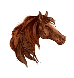 Bay horse with long mane portrait vector