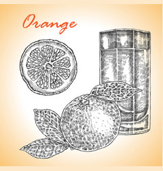 collection of highly detailed hand drawn orange vector image