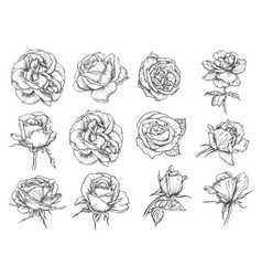 Flowers roses sketch icons vector