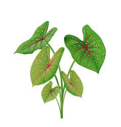 Green leaves anthurium plant tree cartoon vector