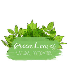 green leaves decoration vector image