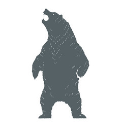 roaring bear silhouette vector image
