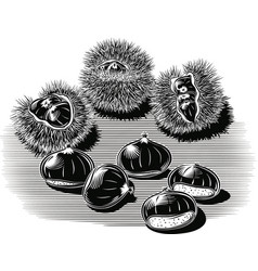 Urchins with chestnuts vector
