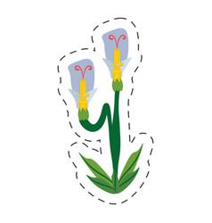 cartoon beauty flower spring vector image
