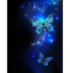 Morpho Butterfly in the Dark vector image vector image