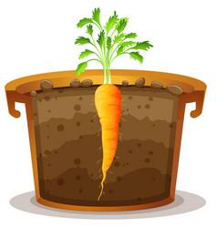 Carrot in pot half view vector