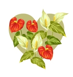 Greeting card with flowers spathiphyllum and vector image