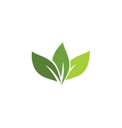 logos of green tree leaf ecology vector image