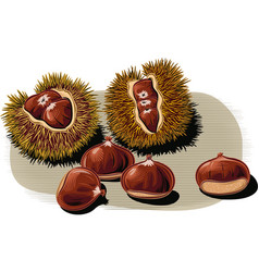 Open chestnut curls with a few scattered chestnuts vector