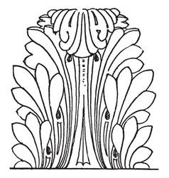 Acanthus leaves roman constitutes a type vector