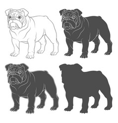 set with english bulldog vector image